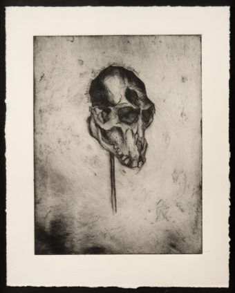 Monkey's skull